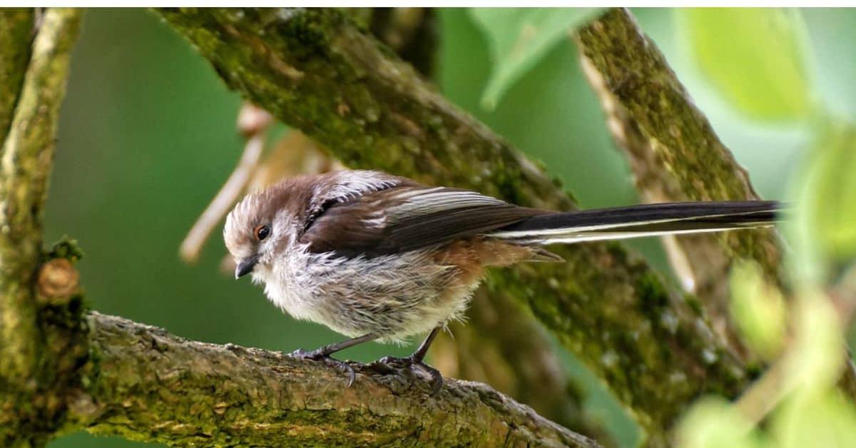 transform-garden-wildlife-haven (1)