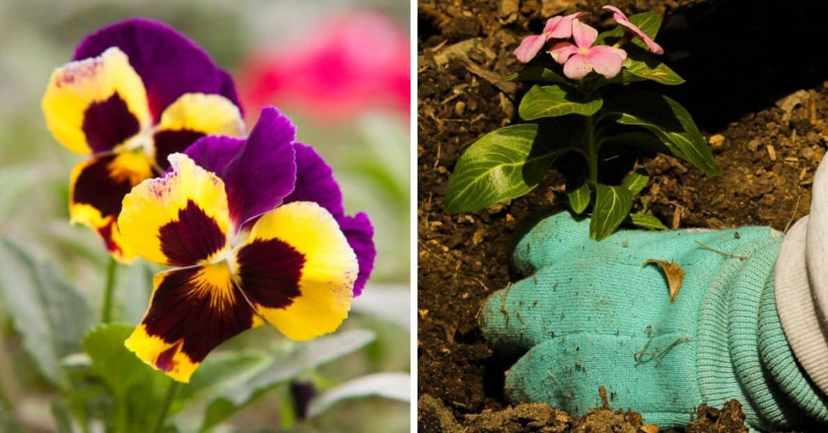 nine-fast-growing-flowers