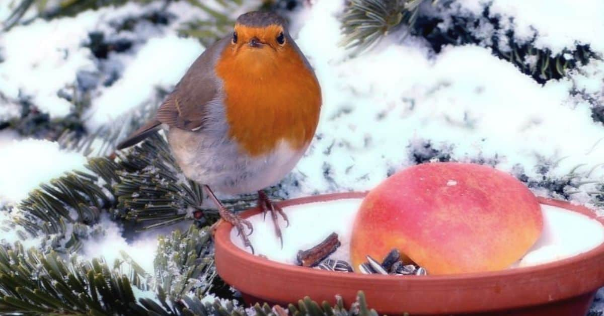 care-for-wildlife-in-winter