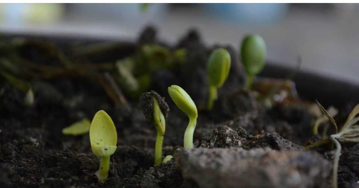 six-of-the-best-organic-fertilisers (1)
