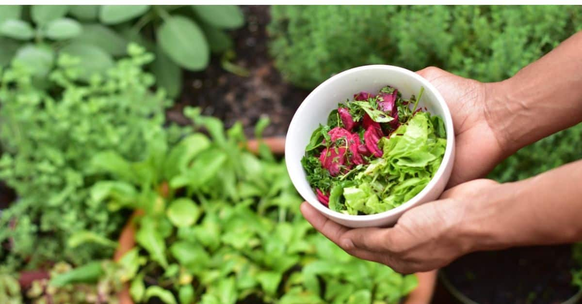 why-you-should-start-a-vegetable-patch-in-your-garden