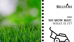 No Mow May: What Is It?